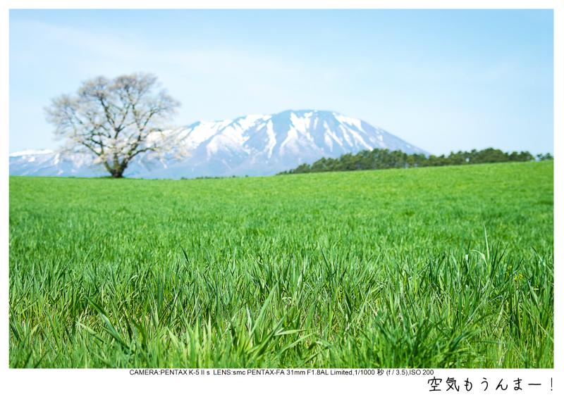 小岩井農場の一本桜3.jpg
