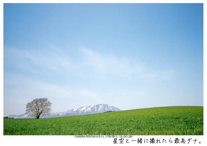 小岩井農場の一本桜5.jpg