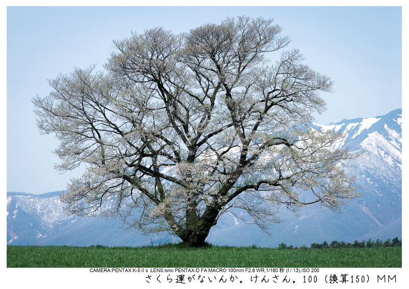 小岩井農場の一本桜6.jpg