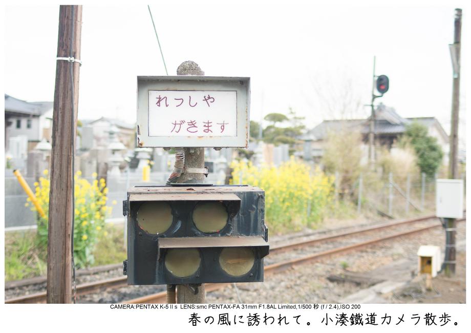 小湊鉄道_菜の花写真0.jpg