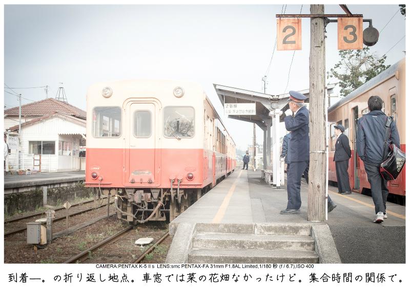 小湊鉄道_菜の花写真4.jpg