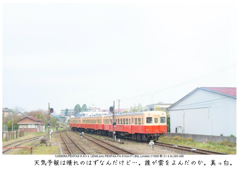 小湊鉄道_菜の花写真7.jpg