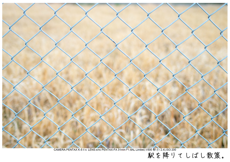 小湊鉄道_菜の花写真8.jpg