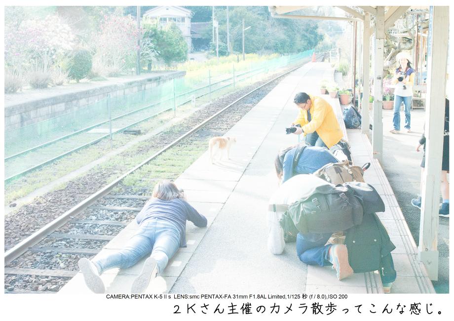 小湊鉄道_菜の花画像0.jpg