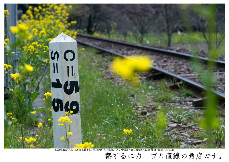 小湊鉄道_菜の花画像14.jpg