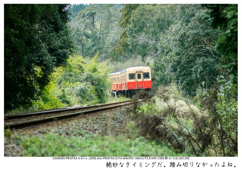 小湊鉄道_菜の花画像15.jpg