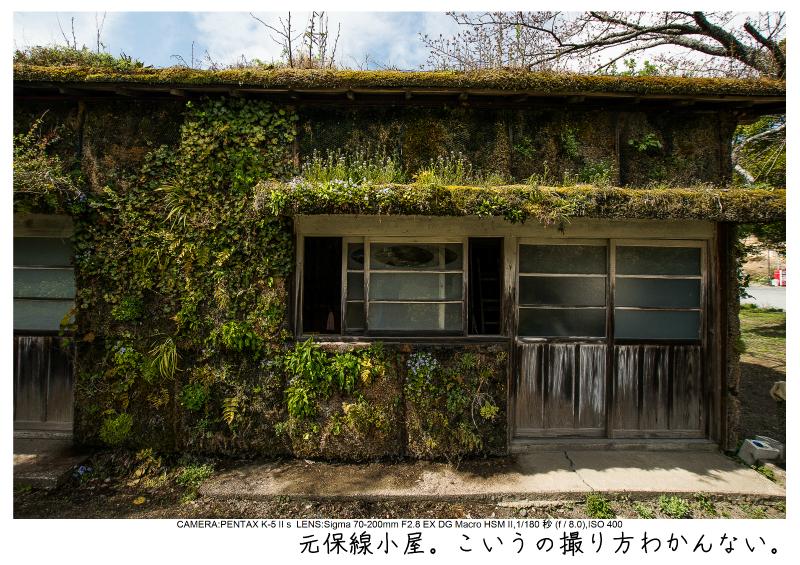 小湊鉄道_菜の花画像23.jpg