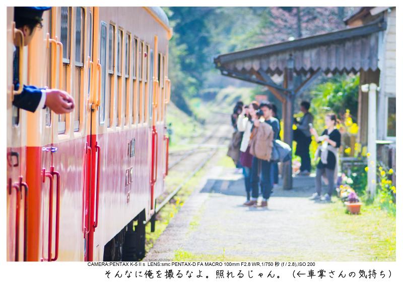 小湊鉄道_菜の花画像28.jpg