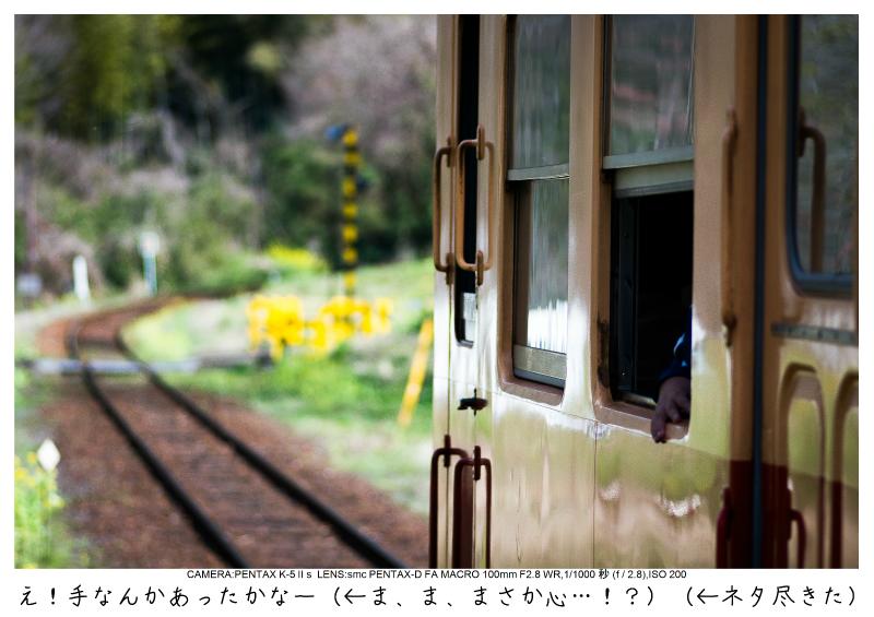 小湊鉄道_菜の花画像29.jpg
