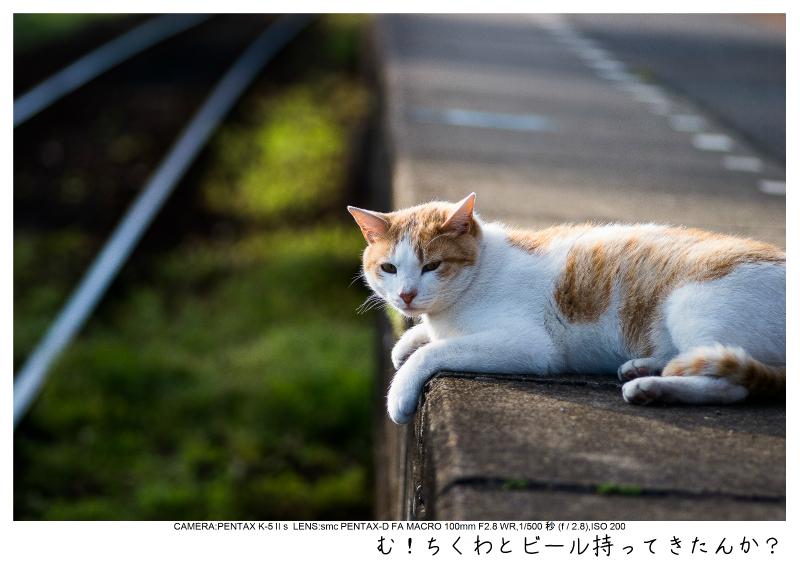 小湊鉄道_菜の花画像53.jpg