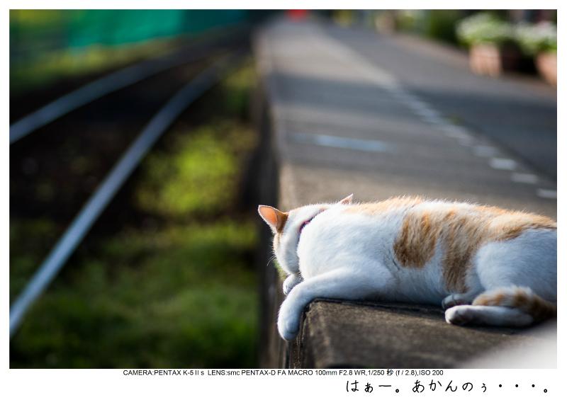 小湊鉄道_菜の花画像54.jpg