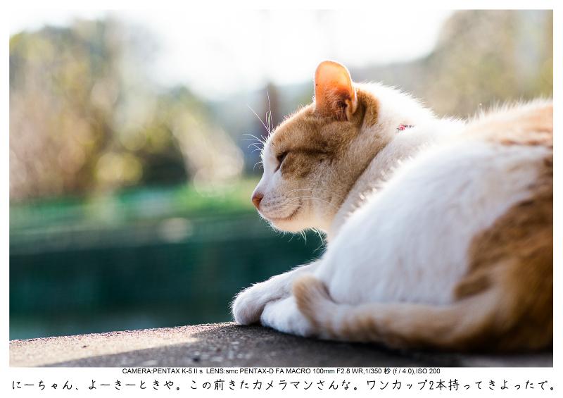 小湊鉄道_菜の花画像59.jpg