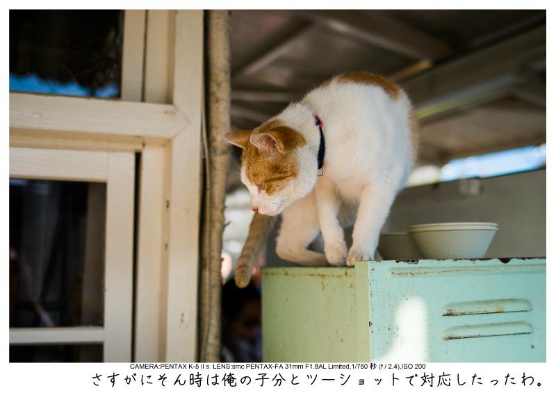 小湊鉄道_菜の花画像60-1.jpg