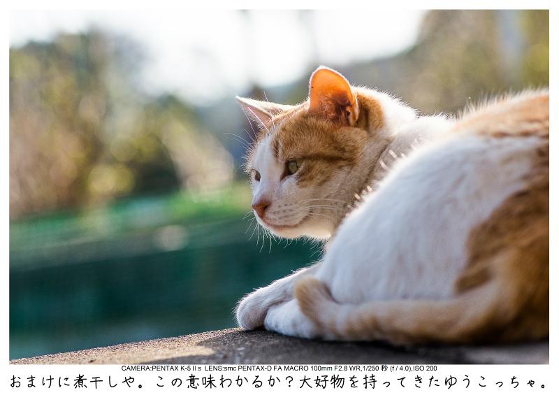 小湊鉄道_菜の花画像60.jpg
