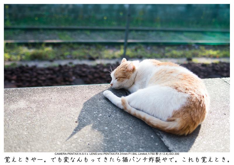 小湊鉄道_菜の花画像61.jpg
