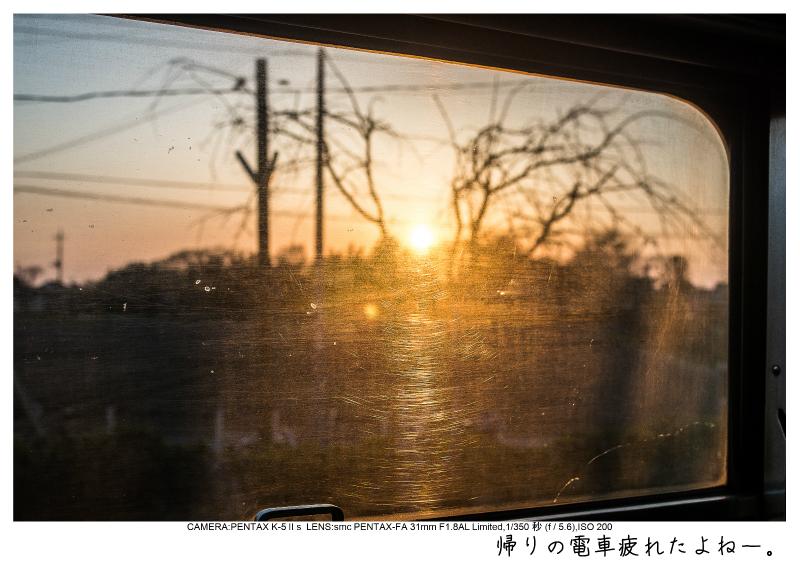 小湊鉄道_菜の花画像64.jpg