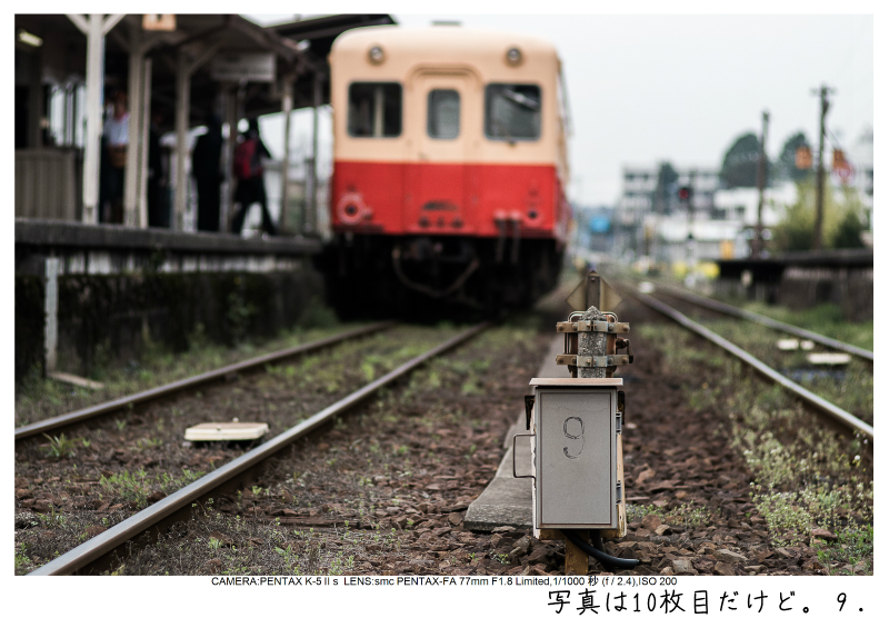 小湊鉄道_菜の花画像9.jpg