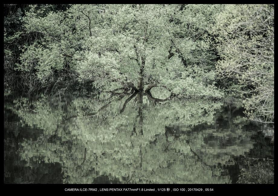 新緑の奈良・室生湖の鏡面シンメトリー0.jpg