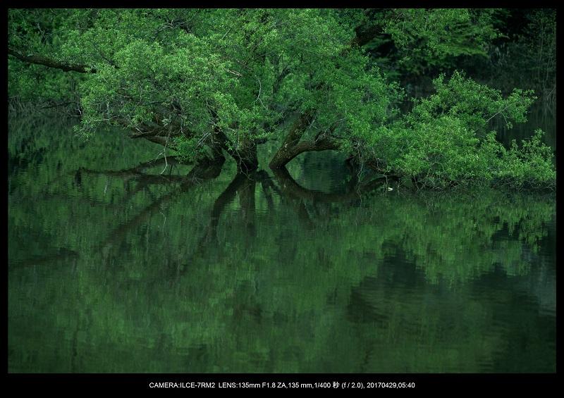 新緑の奈良・室生湖の鏡面シンメトリー1.jpg