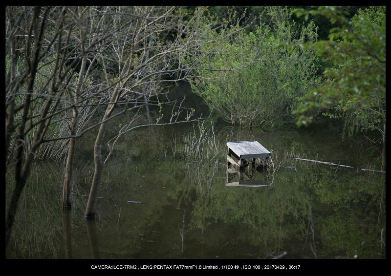 新緑の奈良・室生湖の鏡面シンメトリー10.jpg