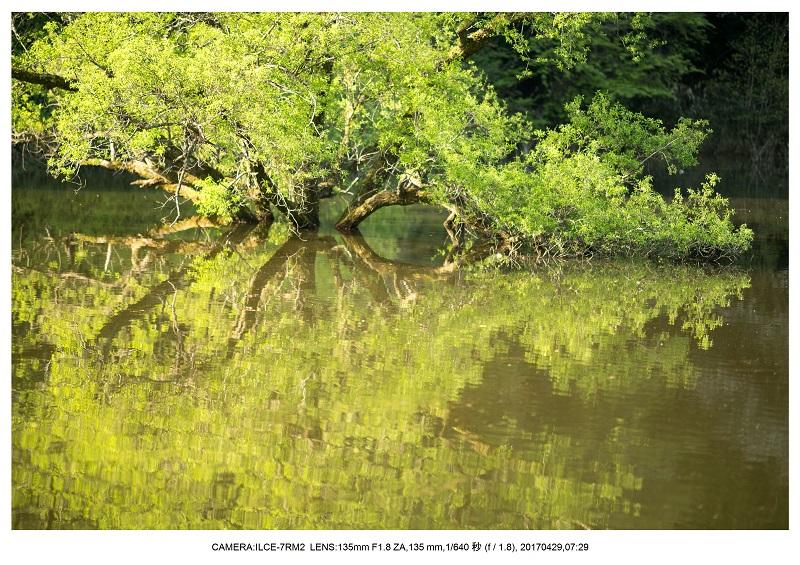 新緑の奈良・室生湖の鏡面シンメトリー20.jpg