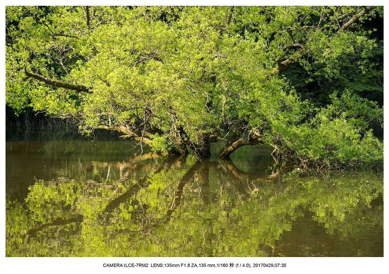 新緑の奈良・室生湖の鏡面シンメトリー21.jpg