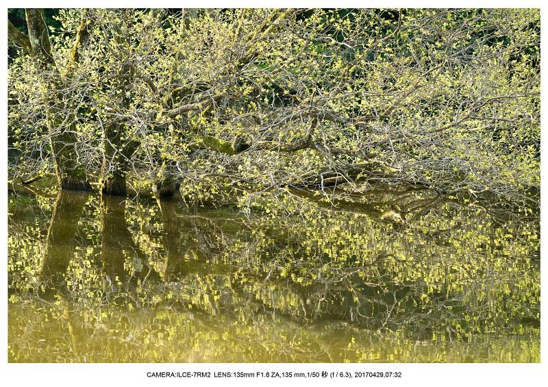 新緑の奈良・室生湖の鏡面シンメトリー22.jpg