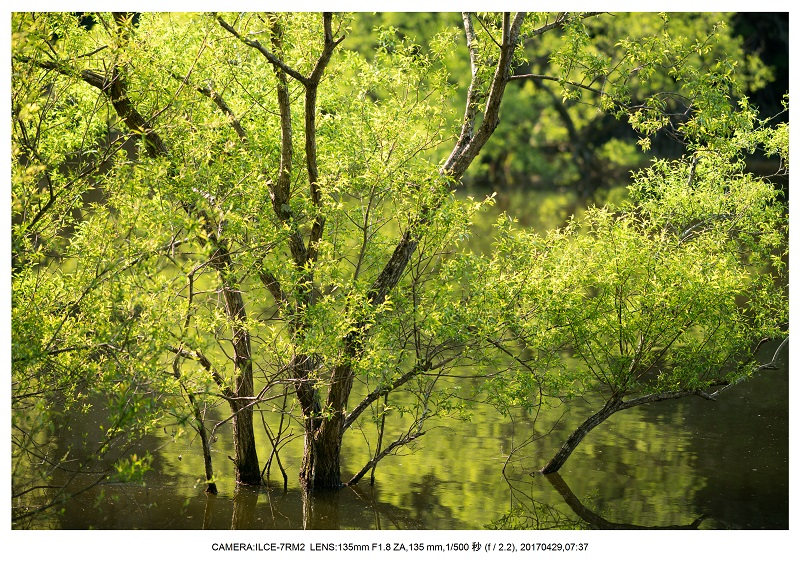 新緑の奈良・室生湖の鏡面シンメトリー25.jpg