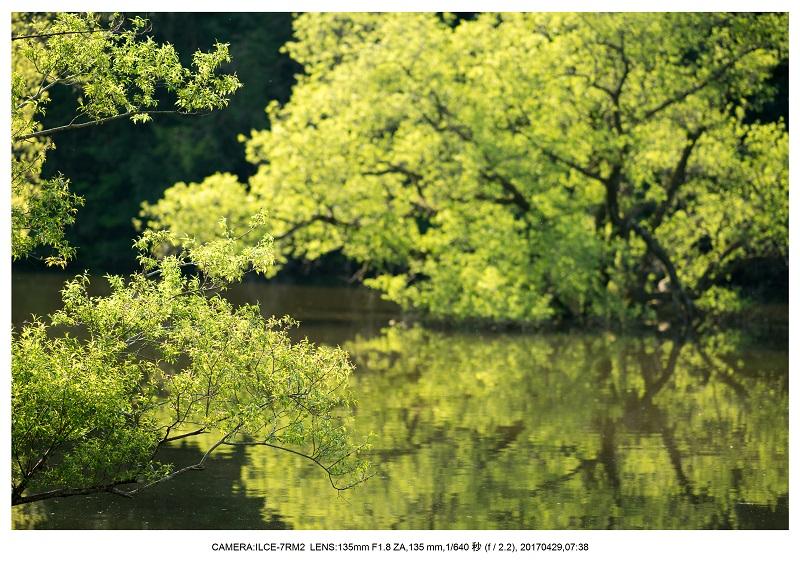 新緑の奈良・室生湖の鏡面シンメトリー26.jpg