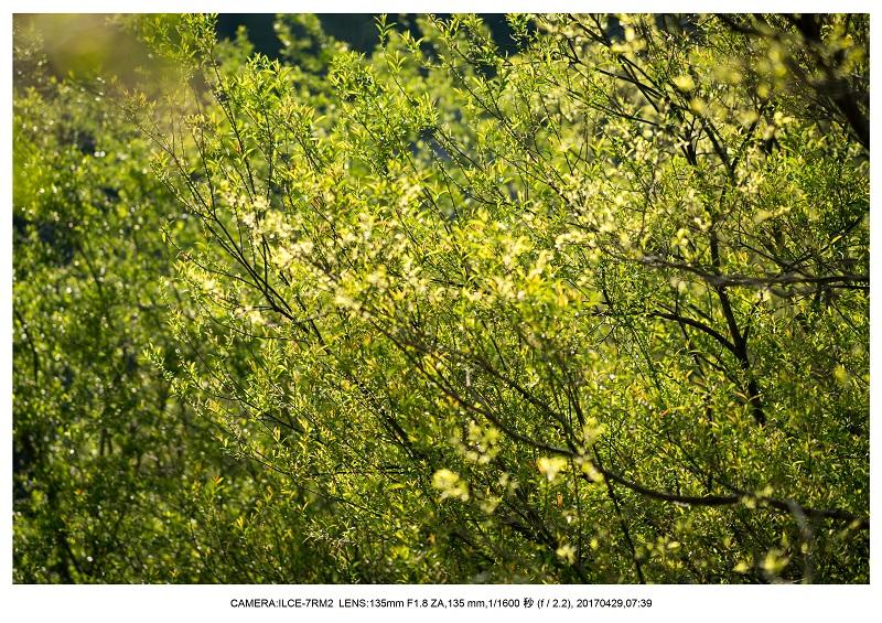 新緑の奈良・室生湖の鏡面シンメトリー27.jpg