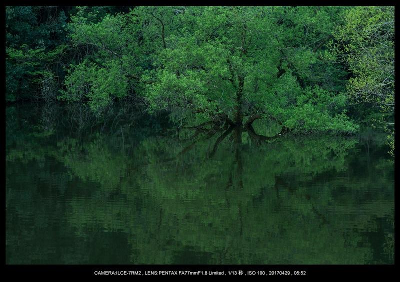 新緑の奈良・室生湖の鏡面シンメトリー3.jpg