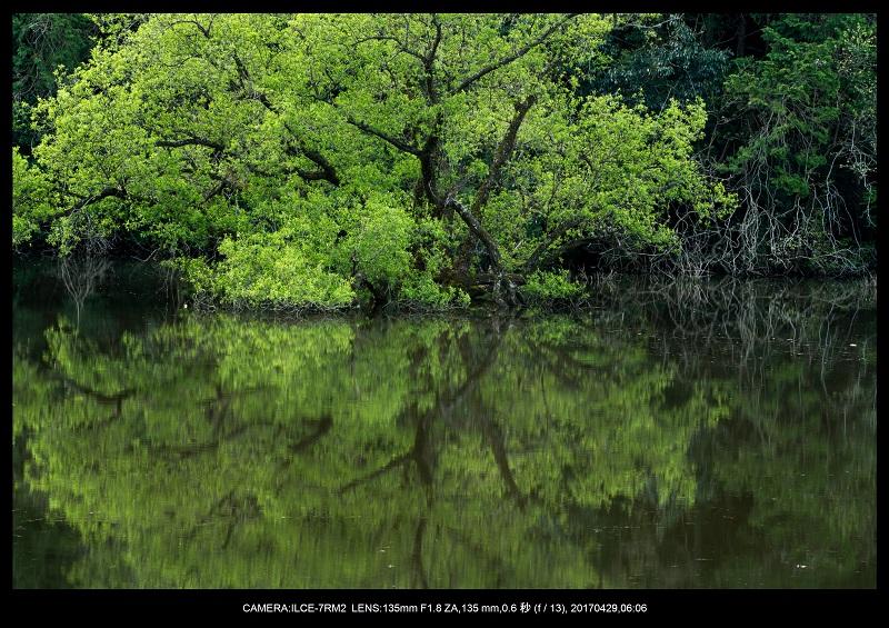 新緑の奈良・室生湖の鏡面シンメトリー7.jpg