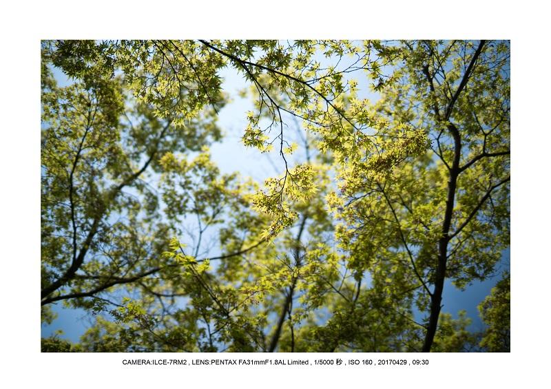 新緑の談山神社十三重の塔15.jpg