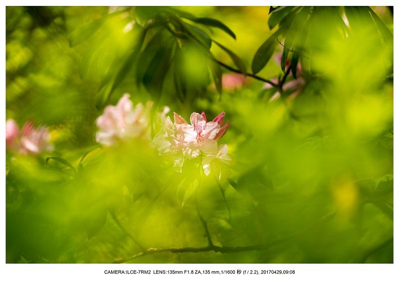 新緑の談山神社十三重の塔7.jpg