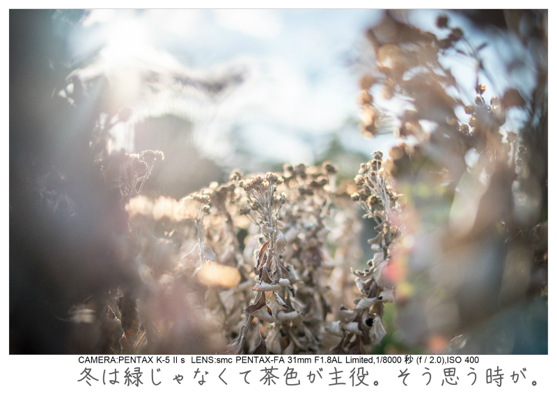 木場公園8.jpg