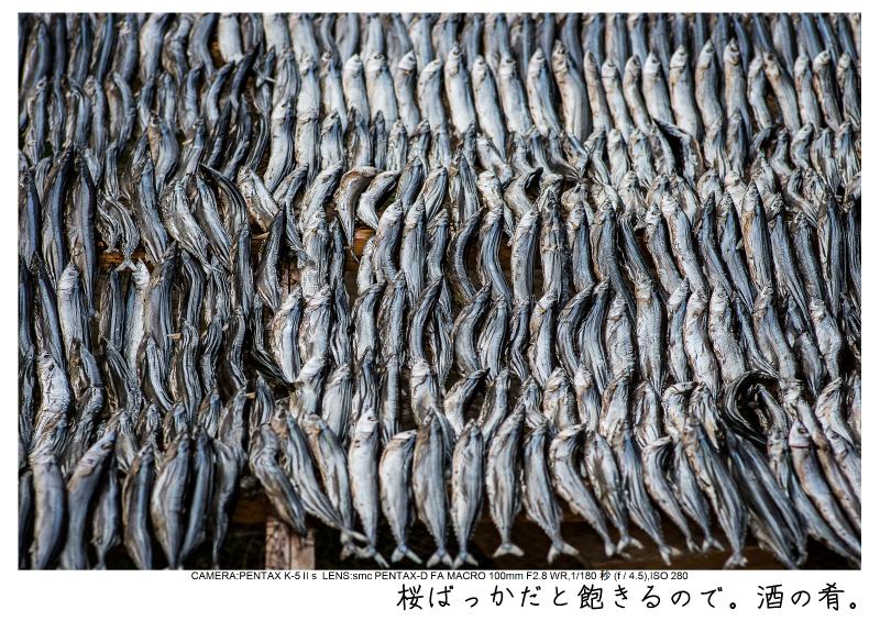 河津町の河津桜15.jpg