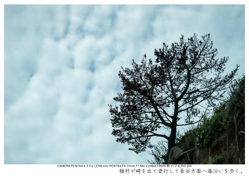 湘南散歩19.jpg
