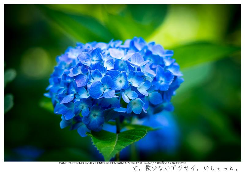 湘南散歩48.jpg