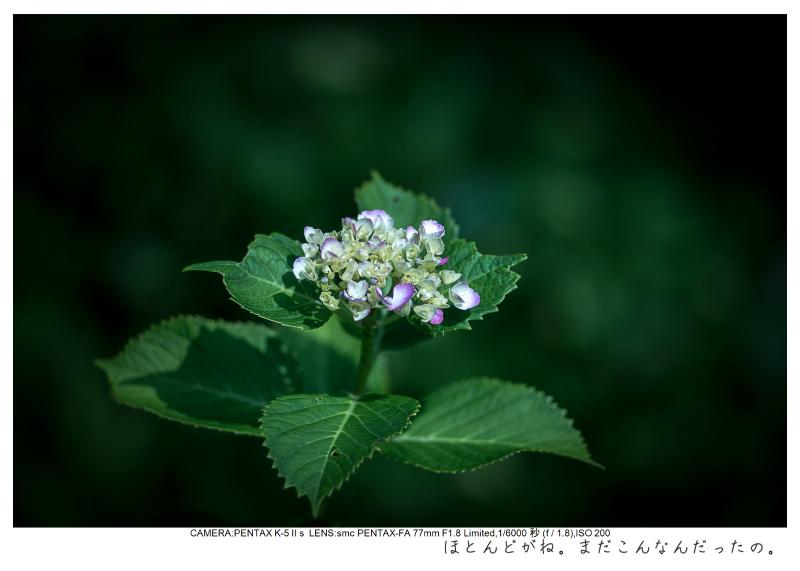 湘南散歩57.jpg