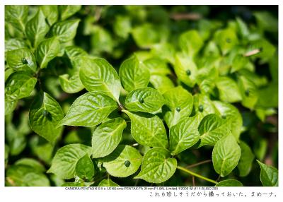 湘南散歩59.jpg