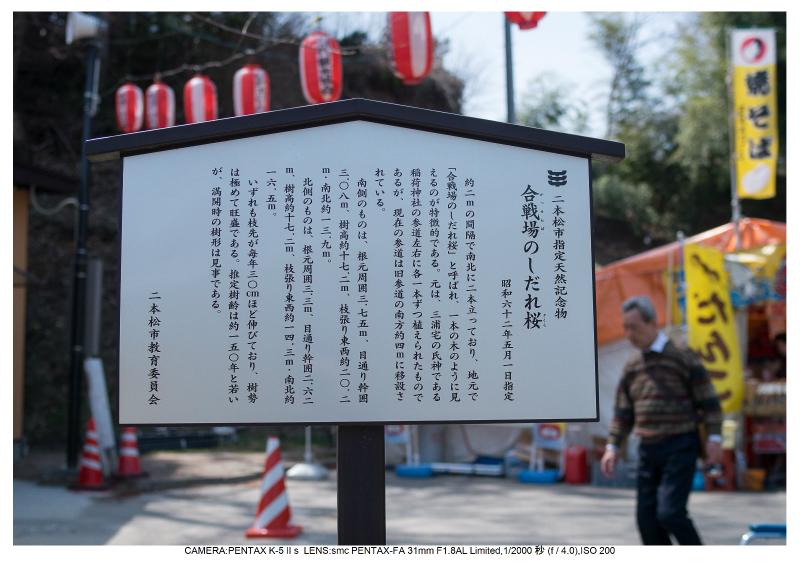 福島桜37合戦場のしだれ桜.jpg
