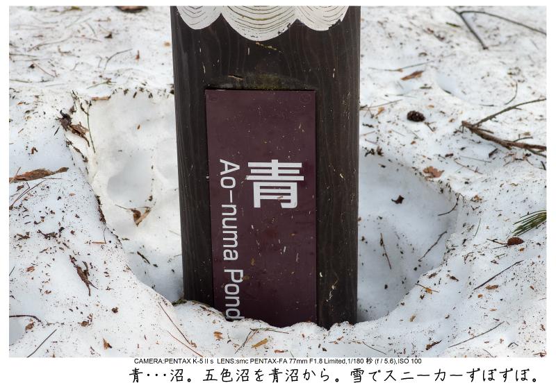 福島桜57裏磐梯.jpg
