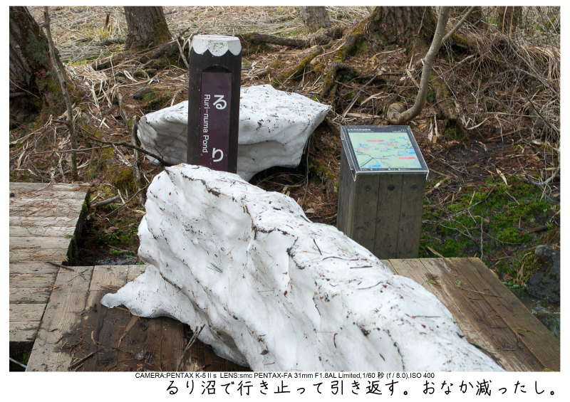 福島桜62裏磐梯.jpg