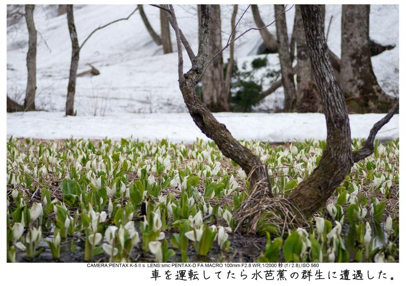 福島桜68裏磐梯.jpg