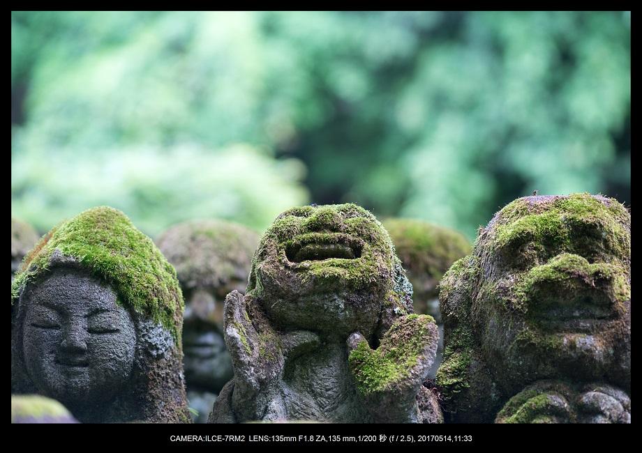 絶景京都・旅行記画像・春の新緑の愛宕念仏寺5月0.jpg