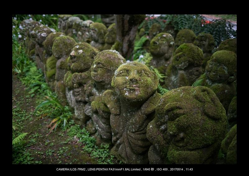 絶景京都・旅行記画像・春の新緑の愛宕念仏寺5月10.jpg