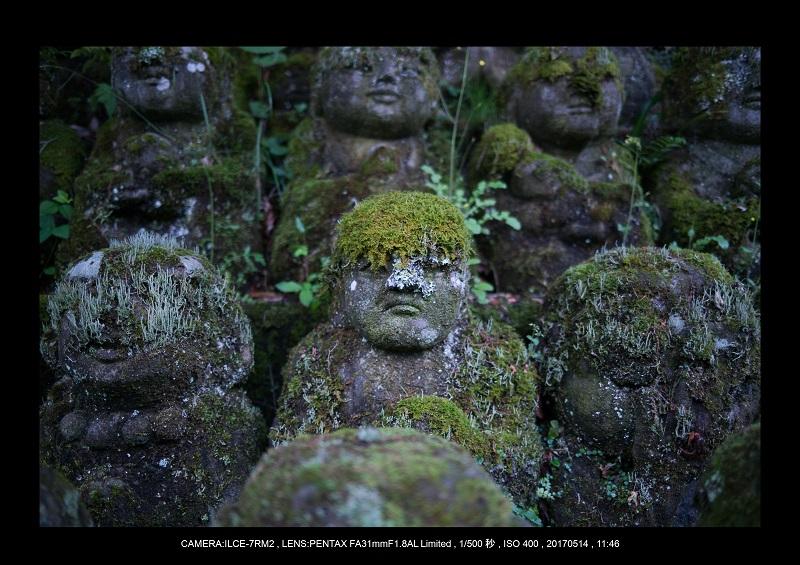 絶景京都・旅行記画像・春の新緑の愛宕念仏寺5月11.jpg