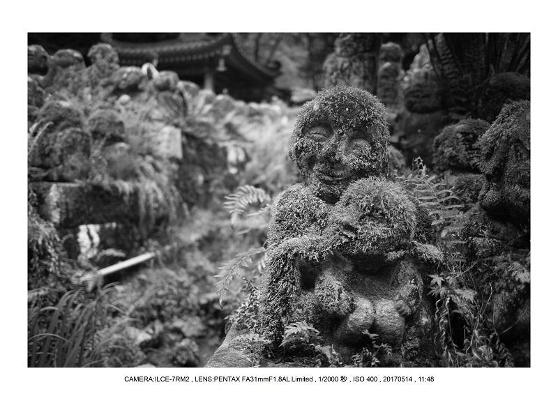 絶景京都・旅行記画像・春の新緑の愛宕念仏寺5月12.jpg