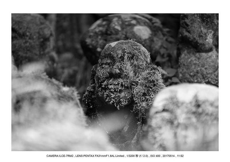 絶景京都・旅行記画像・春の新緑の愛宕念仏寺5月13.jpg