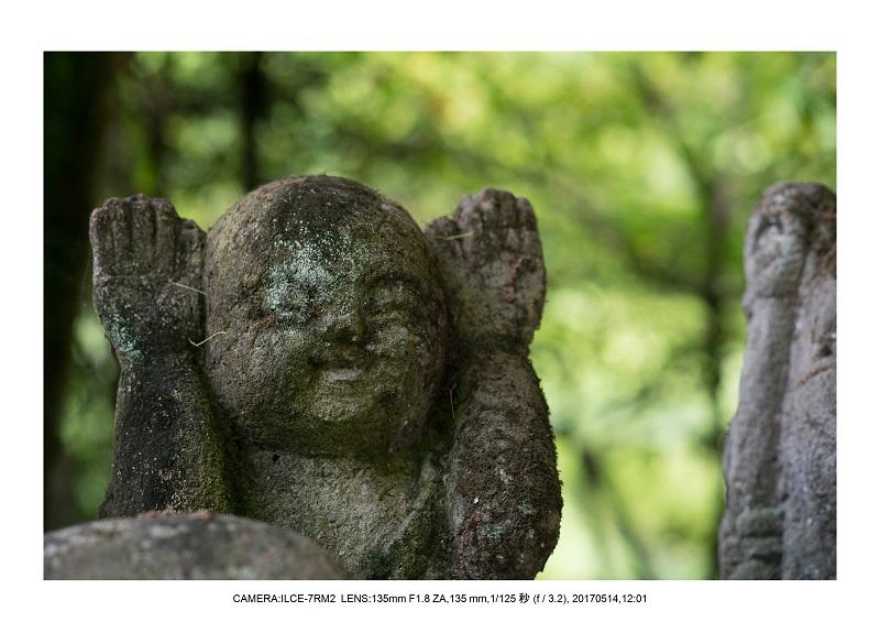 絶景京都・旅行記画像・春の新緑の愛宕念仏寺5月17.jpg